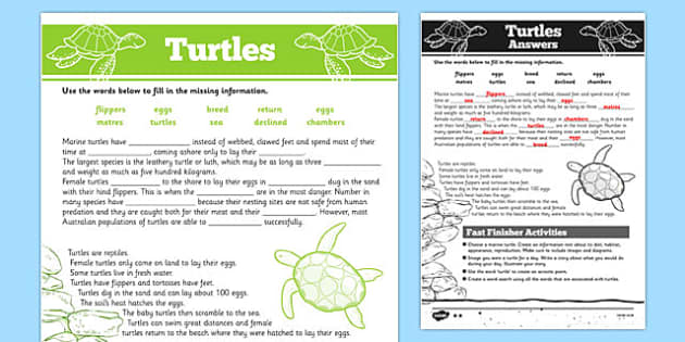 Australian Animals Years 3-6 Turtles Differentiated Cloze Passage Activity Sheet - australia, Australian Curriculum, animals, reptiles, turtle, differentiated, cloze, fast finisher, information, reading, worksheet