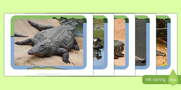Crocodiles Photo Pack