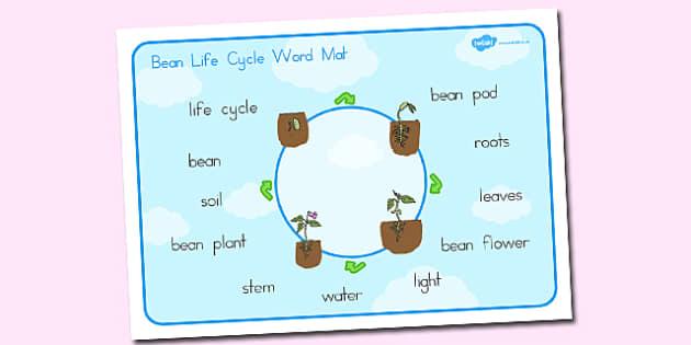 Bean Life Cycle Word Mat - australia, bean, life cycle, word mat