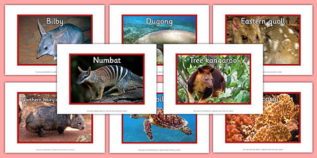 Endangered Australian Animals Display Photos - australia, animals, endangered