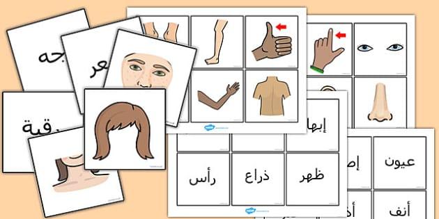 بطاقات مطابقة صورعن أجزاء الجسم - أجزاء الجسم، بطاقات مطابقة
