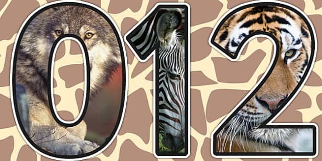 Animals Themed A4 Photo Display Numbers - animal, number, display