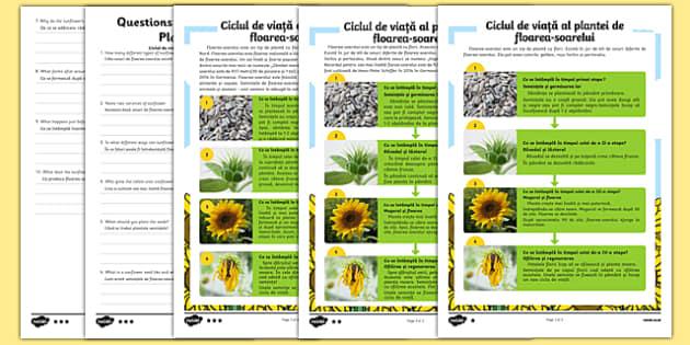 Ciclul de viață al plantei de floarea-soarelui, Fișă de lectură diferențiată