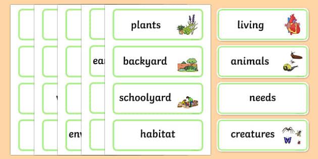 Schoolyard Safari Word Wall Display Cards - Australian Curriculum, Schoolyard Safari, science, Year 1, word wall, display