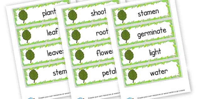 Plant Word Cards - Plants & Growth Classroom Labels Primary Resources, flowers