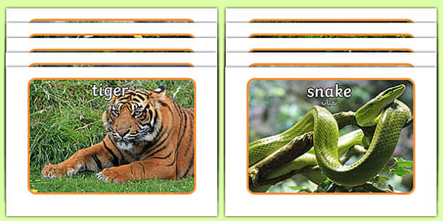 Jungle Display Photos Arabic Translation - arabic, Jungle, Rainforest, Display Posters, photo, display, photos, vines, A4, display, forest, ecosystem, rain, humid, parrot, monkey, gorilla