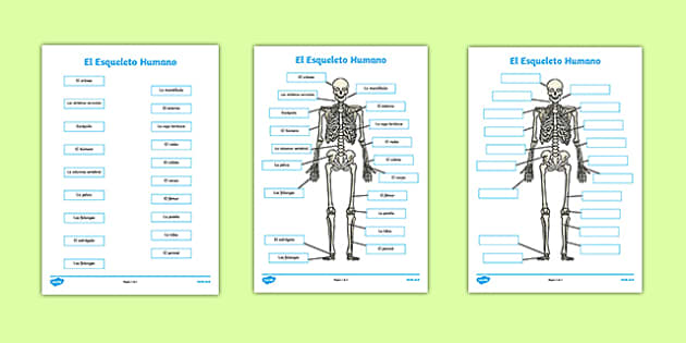El Esqueleto Humano Human Skeleton Labelling Sheets Scientific Names Spanish - spanish, body, labels