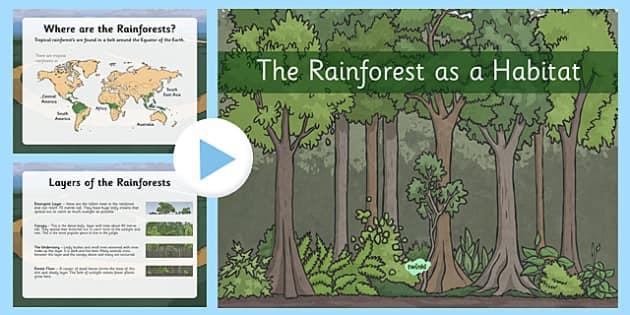 Rainforest as Habitats PowerPoint - the rainforest, habitats, facts about rainforests, around the world, habitats around the world, environments, geography