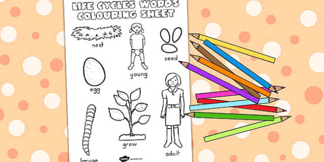 Life Cycles Words Colouring Sheet - colour in, life cycles