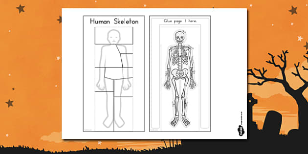 Human Skeleton Interactive Visual Aid - body, human, people, flaps, labels, names, tags, ks2, key stage 2, ks1, early years,cut, scissors