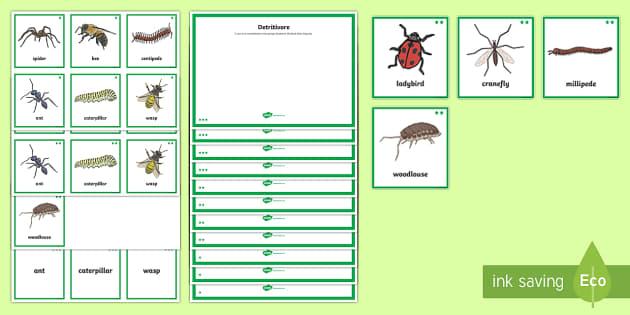 Differentiated Invertebrate Food Sorting Activity Sheet-Scottish - CfE, Science activities, mini beasts, invertebrates, herbivore, carnivore, science sorting activitie