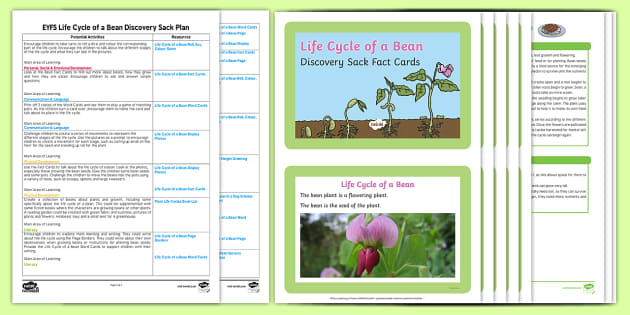 EYFS Life Cycle of a Bean Discovery Sack Plan and Resource Pack - bean, life cycle, discovery sack