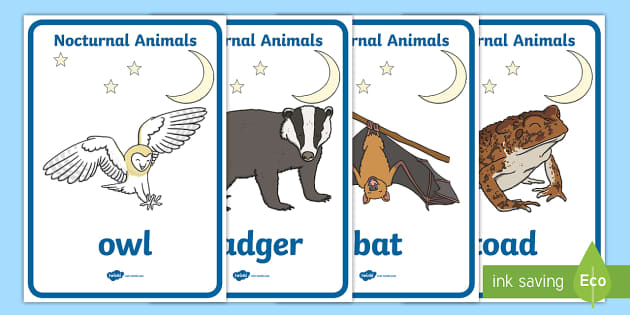 Nocturnal Animals Display Posters - animals, nocturnal, night, poster, banner, display, sign, mole, owl, badger, bat, toad, mouse, hedgehog, fox, rabbit, cat, hamster, shadow, reflection, reflective