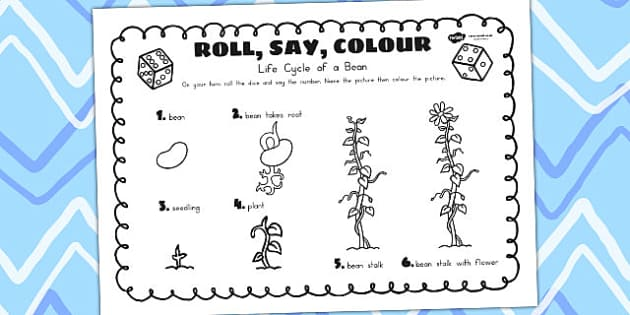 Life Cycle of a Bean Roll Say Colour - life cycles, dice games