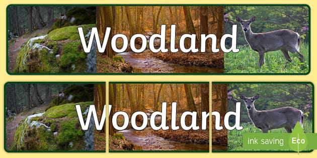 Woodland Photo Display Banner - woodland, photo display banner, photo banner, display banner, banner,  banner for display, display photo, display, pictures