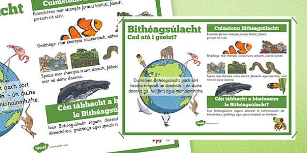Bithéagsúlacht Biodiversity Information Display Poster Gaeilge - Biodiversity, Green schools, environment, display, poster, information, green flag, nature, irish, gaeilge