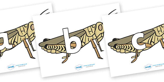Phoneme Set on Grasshoppers - Phoneme set, phonemes, phoneme, Letters and Sounds, DfES, display, Phase 1, Phase 2, Phase 3, Phase 5, Foundation, Literacy