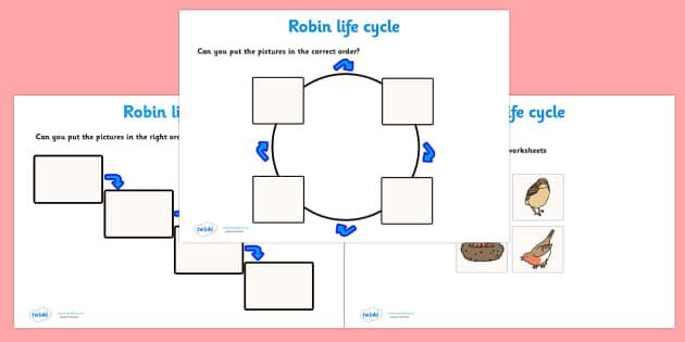 Robin Life Cycle Worksheets -  worksheets, worksheet, robin life cycle worksheets, robin life cycle activities, life cycle worksheets, robin, life cycle