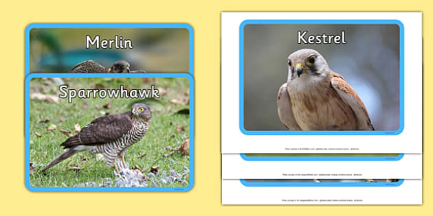 UK Birds of Prey Display Photos - uk birds, birds of prey, display photos, display, photos