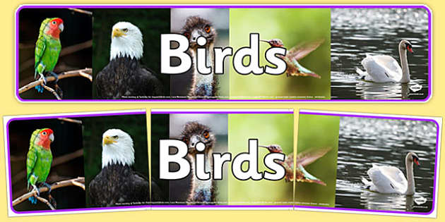 Birds Photo Display Banner - birds, photo, display banner, display, banner