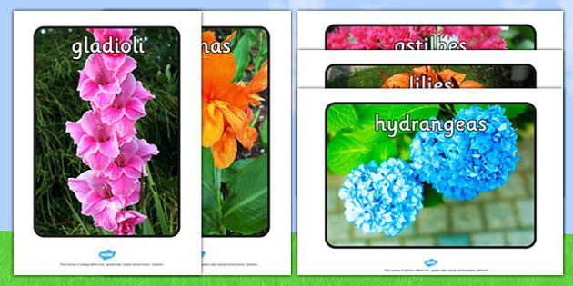 Summer Blooming Flowers Display Photos - summer, blooming, flowers