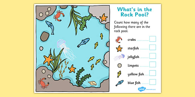 Rockpool Counting Activity - seaside numeracy, seaside counting, counting, rockpool counting, seaside counting activity, rockpool counting worksheet, beach