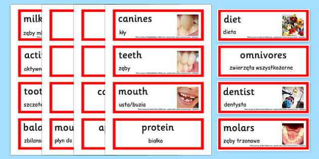 Teeth and Nutrition Word Cards Polish Translation - polish, teeth, nutrition, healthy living, teeth word cards, nutrition word cards, health word cards, healthy eating word cards