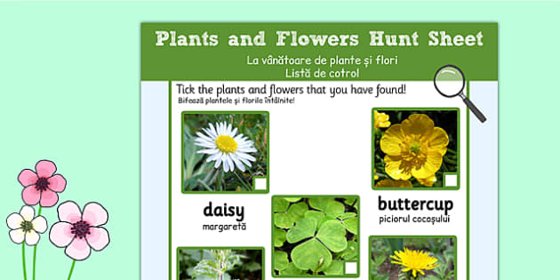 Plants and Flowers Hunt Sheet Romanian Translation - romanian, Plants hunt, flowers hunt, investigation, finding plants, Plant growth , knowledge and understanding of the world, investigation, living things, snail, bee, ladybird, butterfly, spider