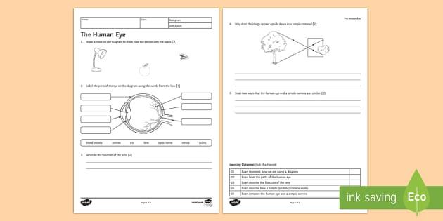 KS3 The Human Eye Homework Activity Sheet - Homework, eye, human eye, how we see, seeing, light, camera, cameras, pinhole camera, lens, focus, r
