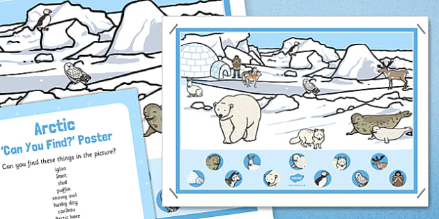 Arctic Can You Find Poster And Prompt Card Pack - arctic, can you find, poster, display, prompt card, pack