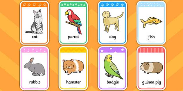 Pet Flashcards - pet, flashcards, flash, cards, pets, animals