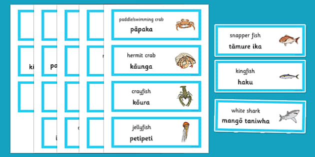 Under the Sea Word Cards Te Reo Māori - sea, seaweek, animals, Māori