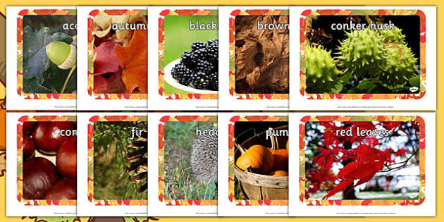 Autumn Display Photos - nz, new zealand, Display Posters, Autumn, seasons,  A4, display, autumn pictures, autumn display, leaves, acorn, conker