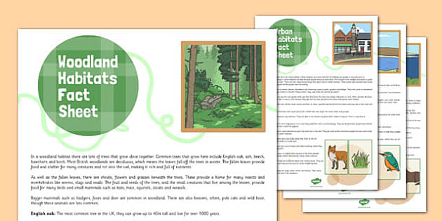 British Habitats Fact Sheets - british, habitats, fact sheets, fact, sheets