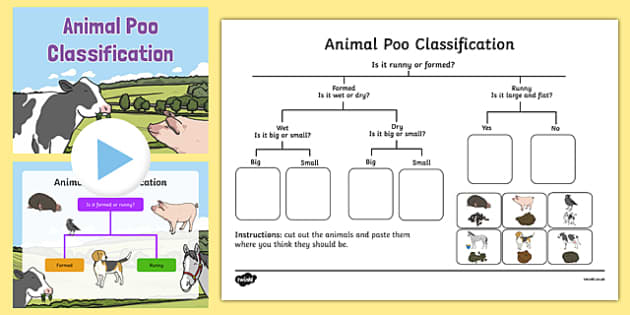Animal Poo Classification Pack - animal poo, classification, pack, animal, poo