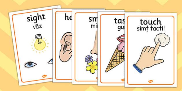The Five Senses Posters Romanian Translation - romanian, five senses