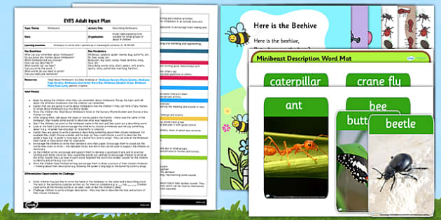 Describing Minibeasts EYFS Adult Input Plan and Resource Pack