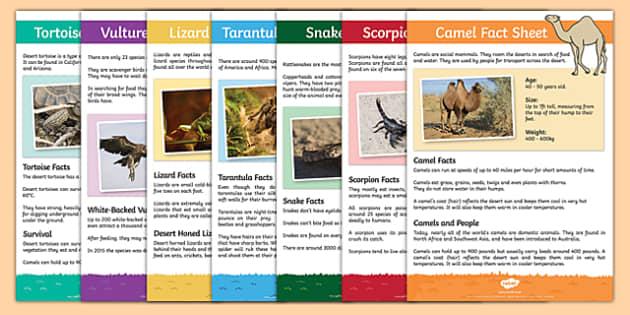 Desert Animals Fact Sheets - desert animals, desert, animals, fact sheets, fact, sheets