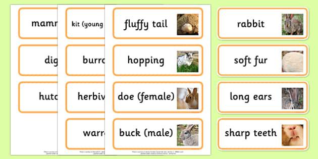 Rabbit Word Cards - rabbit word cards, rabbit, word cards, bunny rabbit, word, cards