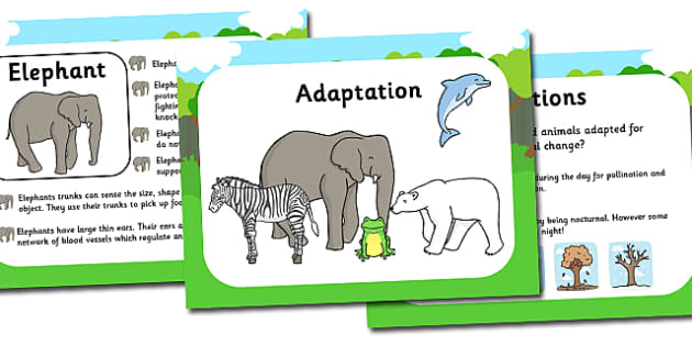 Adaptation Powerpoint and Worksheets Pack adaptation – Adaptation Worksheet