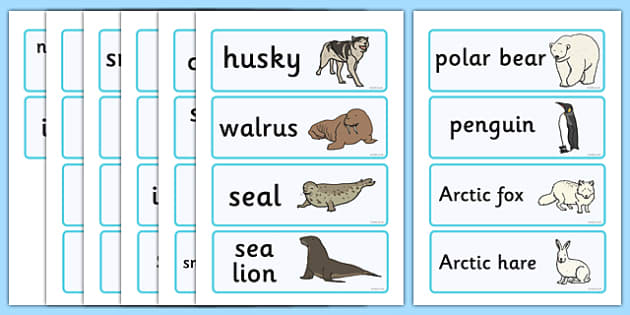Polar Regions Word Cards - Polar Regions Word Cards, Polar Regions, polar region, region, polar, word cards, cards, flashcard, ice, North Pole, South Pole, Arctic, Antarctic, polar bear, penguin, glacier, iceberg, seal, husky, northern lights, igloo,