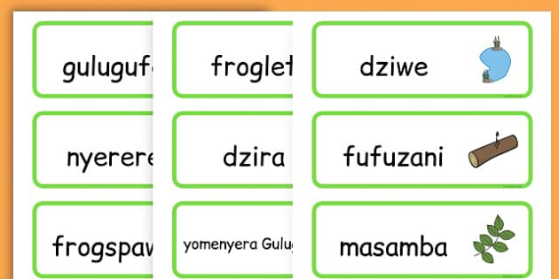 Life Cycle Word Cards - life cycles, lifecycle, visual aid, words - Chichewa