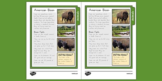 USA Bison Fact Sheet - usa, america, bison, fact sheet, facts, information