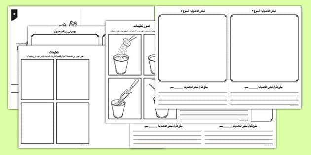 يومياتي لنبات الفاصوليا - يومياتي، نبات، تنمية نبات، فاصوليا