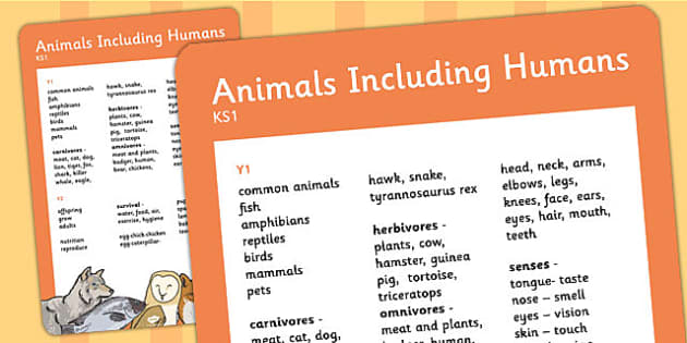 KS1 Animals Including Humans Scientific Vocab Progression Poster