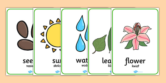 Plant and Growth Word Posters Polish Translation - polish, plant, growth, word, posters