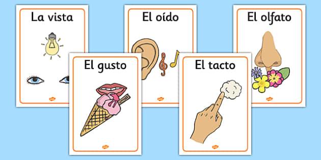 The Five Senses Posters Spanish - spanish, five senses, posters, display, display posters