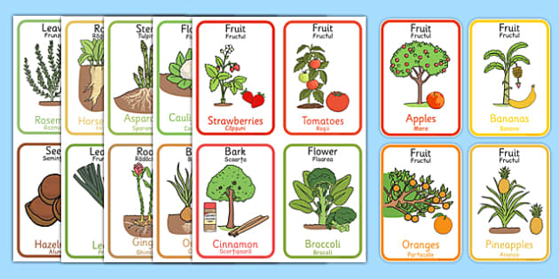 Edible Plant Parts Flash Cards Romanian Translation - romanian, edible plant, plant parts, flash cards