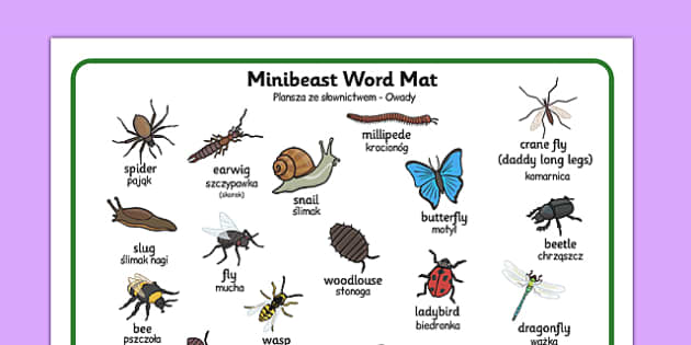 Minibeast Word Mat Polish Translation - polish, minibeast, word mat, word, mat