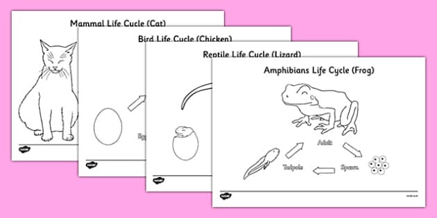 Animal Life Cycles Colouring Sheets - Animal babies, animals and their young, animal life cycles